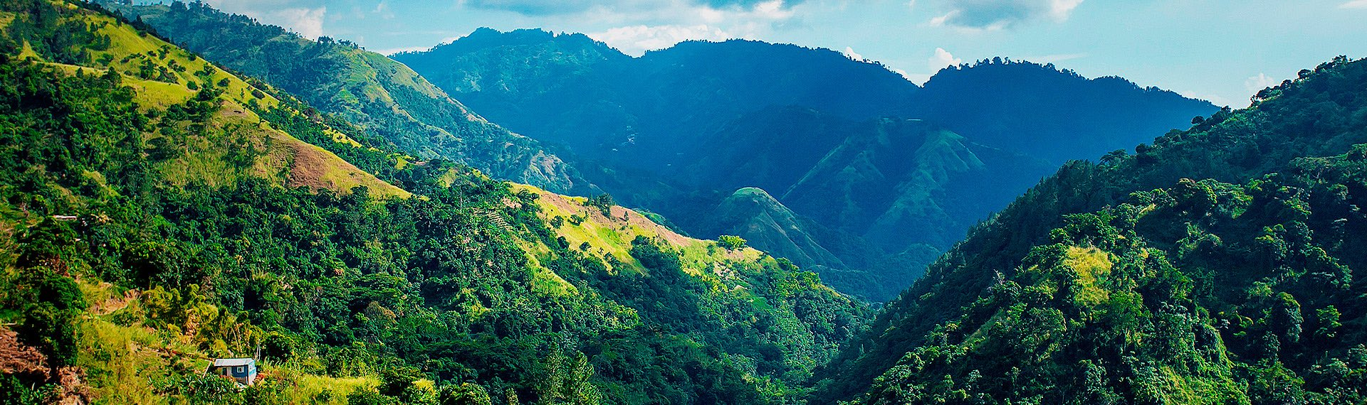 Admire the spectacular landscapes of the Blue Mountains Jamaica
