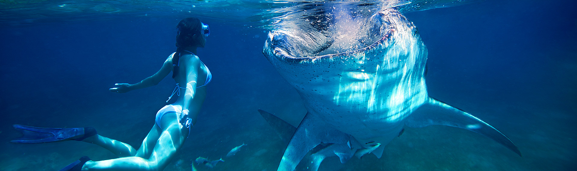 Girl swimming face to face with the whale shark on her vacation in Cancun