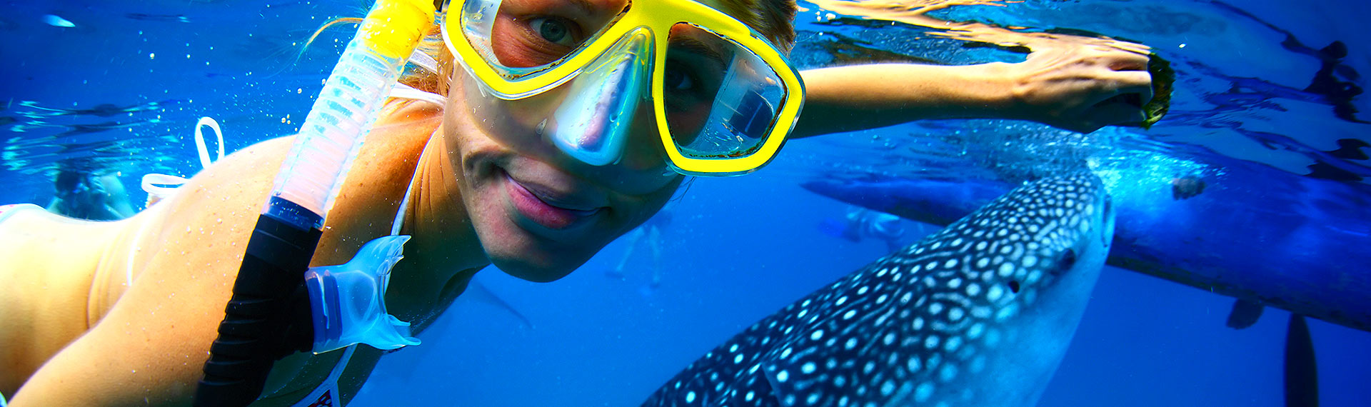 Stunning shot of girl feeding the whale shark on her all inclusive vacations