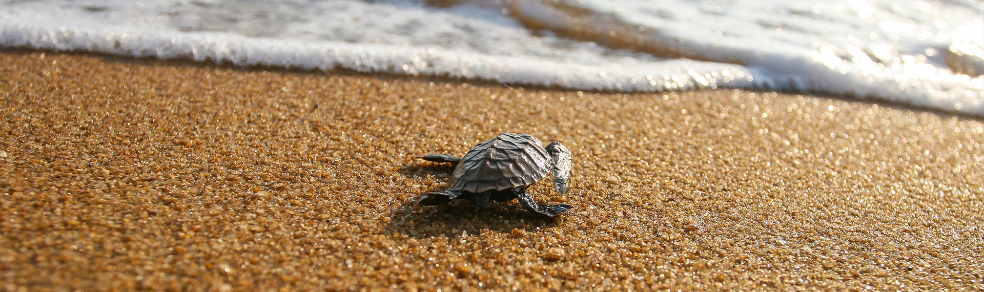 Save the turtle is a of the fun things to do at sea in the summer