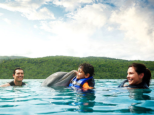 Family enjoying and swimming with dolphins during their holidays in Jamaica all inclusive
